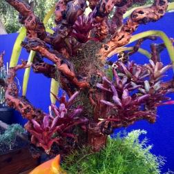 Bromeliad scultpure detail.