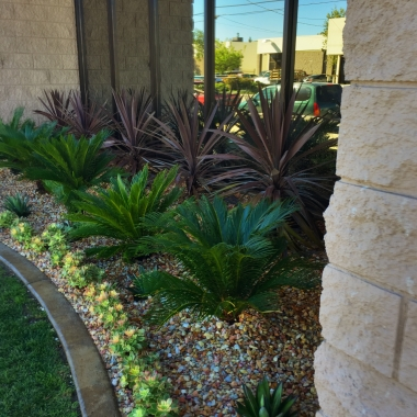 New landscape utilizing Cordyline, Cycas and succulents..