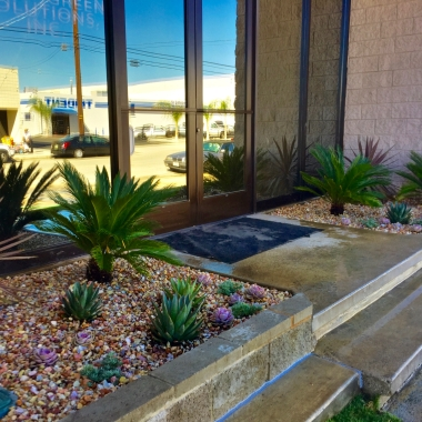 The start of a new entry. Cycads and succulents are low maintenance, and under right conditions will be long lived and need little care. Future, mature cycads make a strong architectual statement, and the succulents will eventually spawn. The planter will fill with color and texture.
