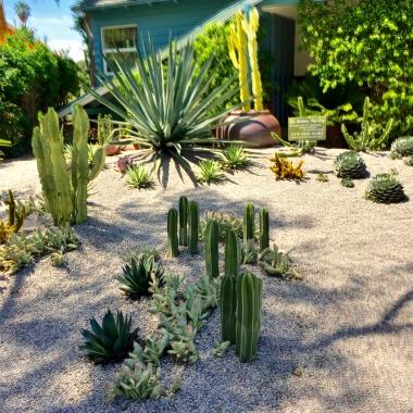 cactus - 4